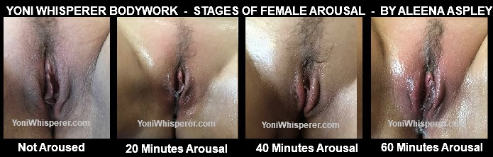 Stages of Female Vulva Arousal by Aleena Aspley